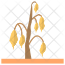 Dehydrated Plant Unwatered Plant Dry Plant Icon