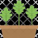 Growing Plants Plant Icon