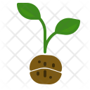 Planting Coffee Tree Icon