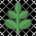 Ecology Green Grow Icon