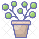 Plants Potted Plants Evergreen Plant Icon
