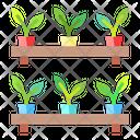 Aplant Plants Nature Icon