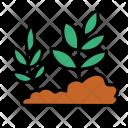 Plants Soil Planting Icon