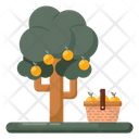Harvest Plucking Fruits Fruit Picking Icon