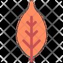 Plum Icon