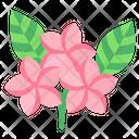 Plumeria Flower Blossom Icon