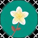 Plumeria Frangipani Blossom Flower Icon