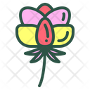 Poeny Flower Floral Icon