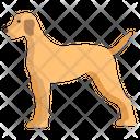 Pointer German Pet Icon