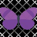 Polyommatus Icarus Swallowtail Icon
