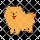 Pomeranian Dog Icon