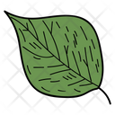 Poplar Leaf Leaf Foliage Icon