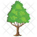 Poplar Tree Icon