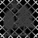Poplar Tree Icon