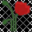 Rose Poppy Flower Icon
