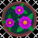 Violet Pot Beautiful Icon
