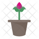 Pot Home Plant Icon