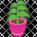 Pot Plant Outdoor Plant Nature Icon
