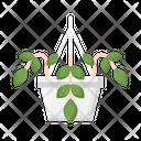 Pothos Houseplant Plant Icon