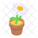 Indoor Plant Potted Plant Decorative Plant Icon