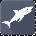 Predator Shark Sea Icon