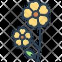 Primrose Primula Polyanthus Icon