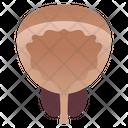 Prostate Gland Icon