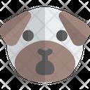 Pug Shock Animal Wildlife Icon