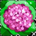 Purple Cauliflower Icon