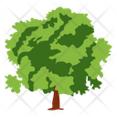 Quercus Ilex Fruit Tree Wild Tree Icon