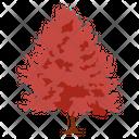 Quercus Palustris Pin Oak Swamp Spanish Oak Icon