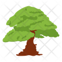 Quercus Robur Common Oak Pedunculate Oak Icon