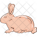 Rabbit Hare Rodent Icon