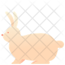 Animal Pet Bunny Icon