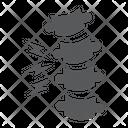 Rachiocampsis Spinal Deformation Icon