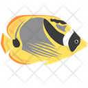Racoon Butterfly Fish Sea Creature Animal Icon