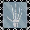Radiology Skeleton Bone Icon