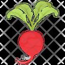 Radish Leaves Food Icon