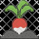 Radish Seeding Icon