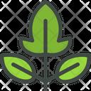 Raspberry Leaves Leaf Icon