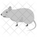 Rat Mice Mouse Icon
