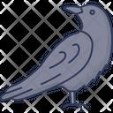 Raven Bird Crow Icon