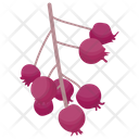 Red Currant Icon