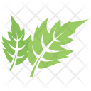 Shape Redraw Hawthorn Botanical Icon