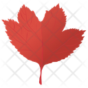 Red Maple Icon