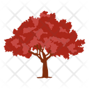 Oak Tree Red Oak Wild Tree Icon