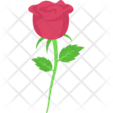 Blossom Red Rose Day Icon