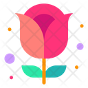 Red Rose Rose Flower Icon