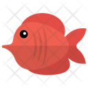 Red Tang Icon