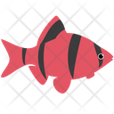 Red Tiger Barb Glofish Icon